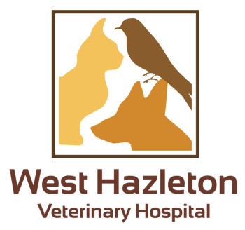 West Hazleton Veterinary Hospital
